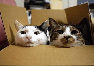 deux chats cartons déménagement